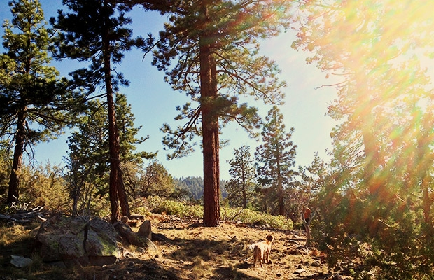 pet friendly cabin rentals big bear ca Pet Friendly Cabins In Big Bear