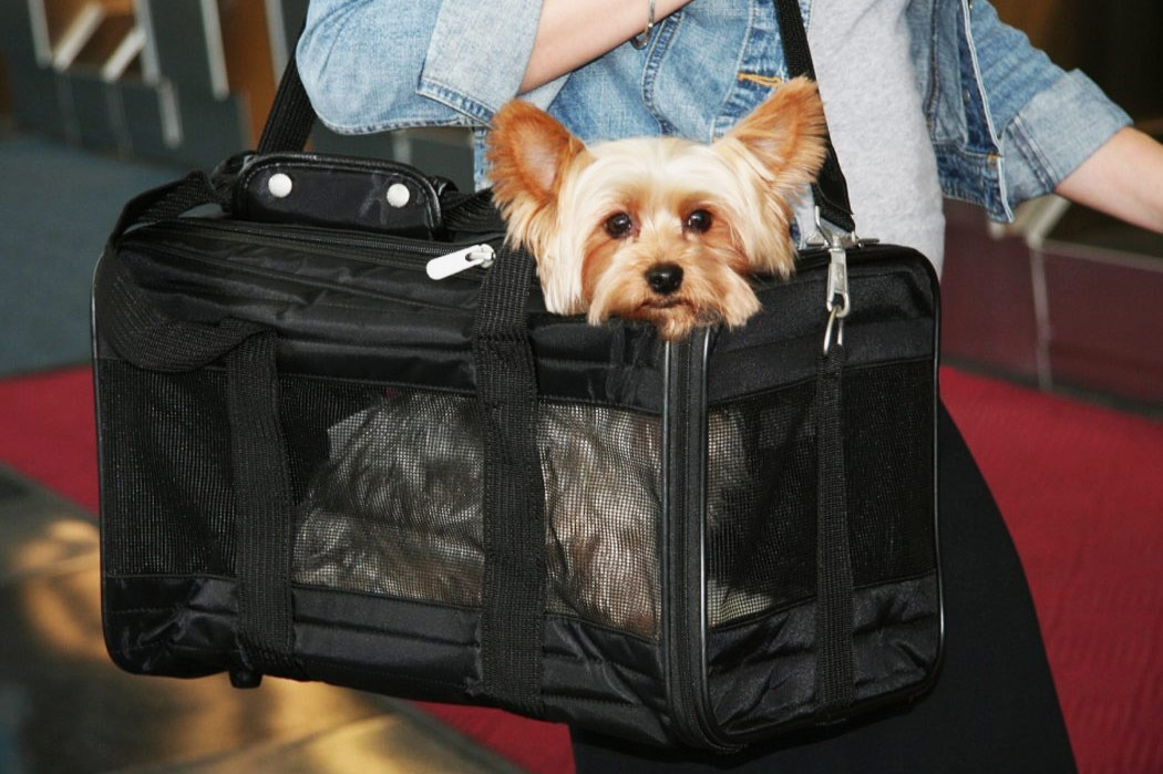 the 10 best dog carriers on amazon 2018 Flying With A Dog In Cabin
