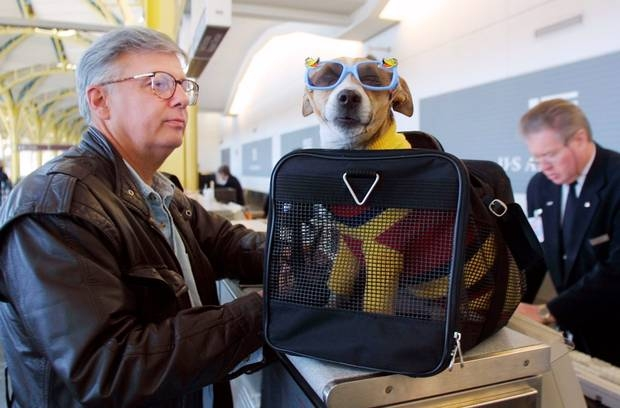 travelling with pets which airlines take dogs and cats on board Flying With A Dog In Cabin
