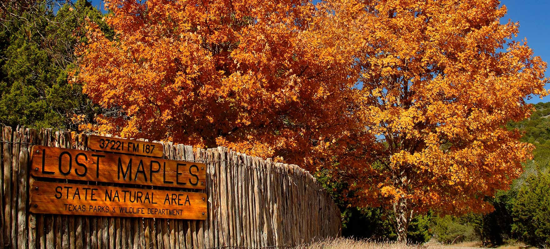 Lost Maples State Natural Area — Texas Parks & Wildlife Department