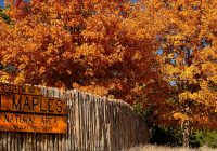 Lost Maples Cabins-Lost Maples State Natural Area — Texas Parks & Wildlife Department