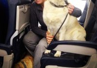 airlines break their own rules so pets can escape fires bored panda Flying With A Dog In Cabin
