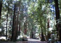 big sur campground cabins updated 2019 room prices reviews ca Big Sur Campgrounds And Cabins