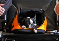 dogs will fly in the cabin on delta planes just like all other Flying With A Dog In Cabin